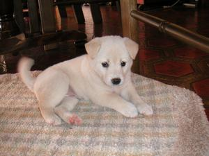 blogphoto/puppy