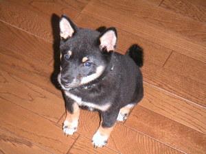 puppy03