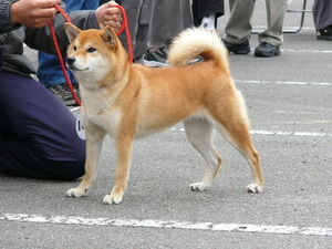 shiga02